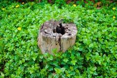 Ceppo fra le piante verdi Fotografia Stock Libera da Diritti