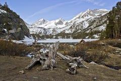 Ceppo lungo del lago Fotografia Stock