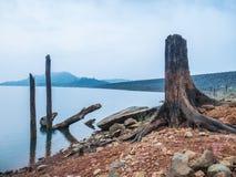 Ceppo nel lago Immagini Stock