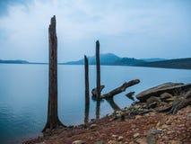 Ceppo nel lago Fotografia Stock Libera da Diritti