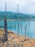Ceppo nel lago Fotografie Stock
