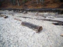 Ceppo nella sabbia Immagine Stock Libera da Diritti