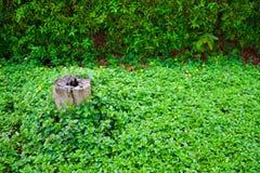 Ceppo nella sinistra fra le piante verdi Fotografie Stock Libere da Diritti