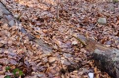 Ceppo nelle foglie Immagini Stock Libere da Diritti
