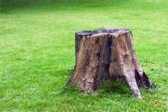 Ceppo su erba verde Fotografia Stock Libera da Diritti