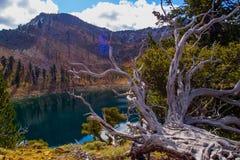 Ceppo vicino al lago alpino Fotografie Stock