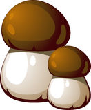 Ceps Stock Photos