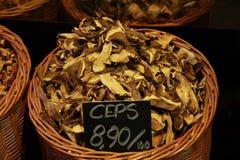 Ceps Stock Image