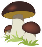 Ceps Stockfotos