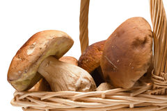 Ceps in basket Stock Images