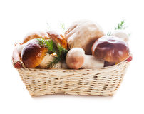 Ceps in the basket Royalty Free Stock Photography
