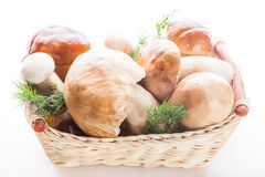 Ceps in the basket Stock Photos