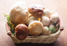 Ceps in the basket Stock Image