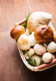 Ceps in the basket Stock Images