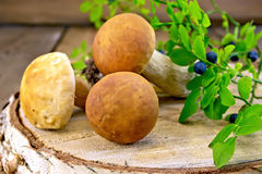 Ceps with blueberries on birch billet Royalty Free Stock Images