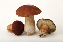 Ceps (Boletus edulis) Royalty Free Stock Photos