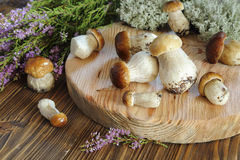Ceps on a cutting board Royalty Free Stock Photos