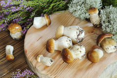 Ceps on a cutting board Royalty Free Stock Images
