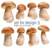 Ceps. Gustable edulis isolated on white background with set for design Stock Photography