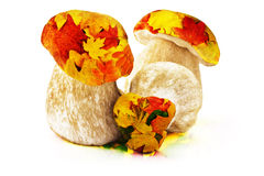 Ceps and leaves Stock Image