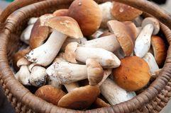 Ceps 3 Stock Images