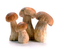 Ceps mushrooms Royalty Free Stock Image