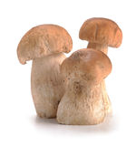 Ceps mushrooms Stock Photography