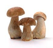 Ceps mushrooms Stock Photos