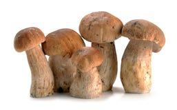 Ceps mushrooms Stock Images