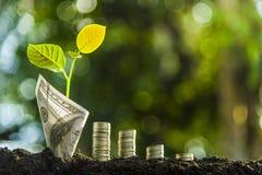 A cerâmica as plantas é plantada na parte superior e nas três pilhas das pilhas Para o crescimento, ideias econômicas, economias  foto de stock royalty free