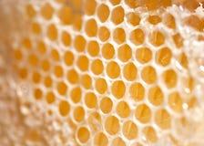 Cera d'api Fotografia Stock