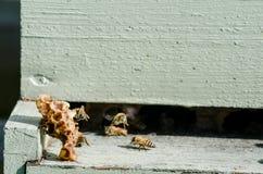 Cera de abejas vieja del piecesof en la entrada a la colmena Imagen de archivo