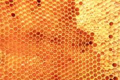 Cera de la abeja con la miel fresca Imagenes de archivo