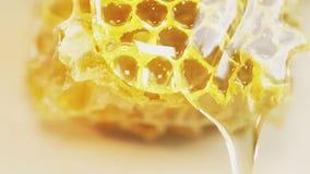 Cera del favo dell'ape con miele stock footage