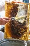 Cera dos cortes do apicultor fora Imagens de Stock Royalty Free