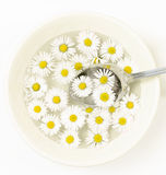 Ceramic bowl with daisy flowers and spoon Royalty Free Stock Photos