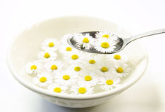 Ceramic bowl with daisy flowers and spoon Stock Image
