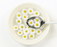 Ceramic bowl with daisy flowers and spoon Royalty Free Stock Image