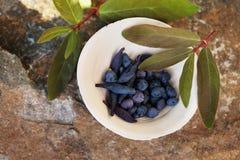 Ceramic bowl with honeysuckle berries Royalty Free Stock Photo