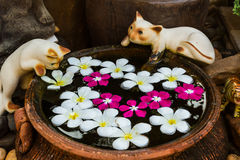 Ceramic cats on the edge of a fish pool. Royalty Free Stock Images