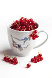 Ceramic cup with wet red currant Royalty Free Stock Image