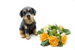 Ceramic dog. Ceramics dog with flower jewelry Royalty Free Stock Photography