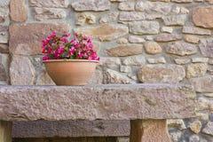 Ceramic flower pot Stock Images