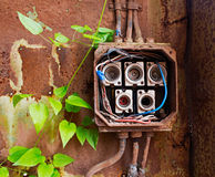 Ceramic fuses in old electric box and green ivy Royalty Free Stock Image