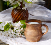 Ceramic jug with fresh new milk on a authentic linen tablecloth and blooming cherry branch. Sprng morning still life Royalty Free Stock Photo