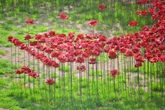 Ceramic poppies Royalty Free Stock Images