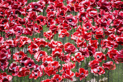 Ceramic Poppies at Tower of London Stock Images