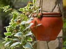 Ceramic pot Stock Photos