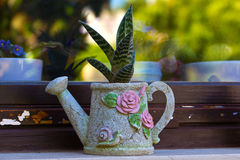 Ceramic pot with flower Royalty Free Stock Images