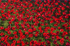 Ceramic red poppies Stock Images